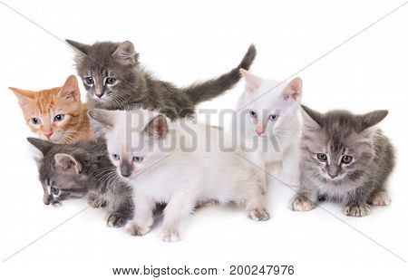 young kitten in front of white background
