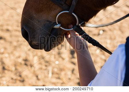 Close-up of hand caressing white horses mouth