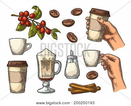 Set coffee. Glass latte with whipped cream and cinnamon stick. Female Hand hold cup. Sugar beans branch with leaf and berry. Vintage color vector engraving illustration isolated on white background