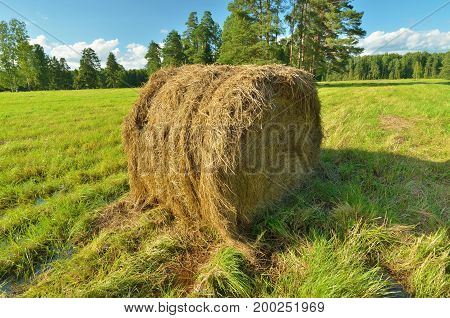 In the field once the grass is cutis a haystack.