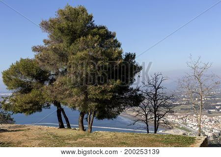 Pine trees grow over the precipice on a sunny day