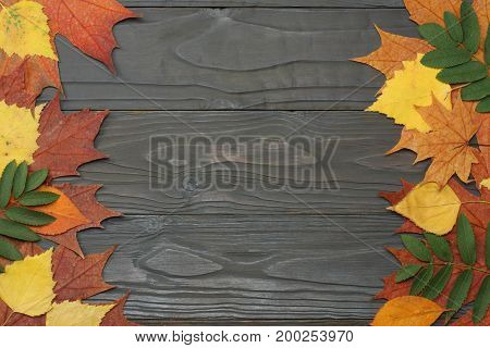 autumn background with colored leaves on dark wooden board. top view with copy space