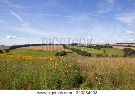 Patchwork Fields And Wildflowers