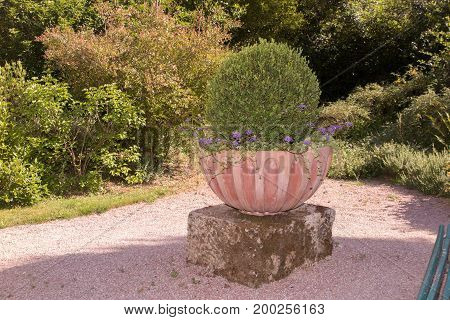 A Large Flower Pot In The French Garden
