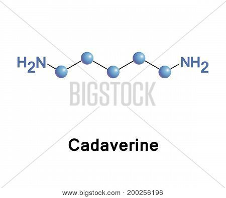 Cadaverine is a foul-smelling diamine compound produced by the putrefaction of animal tissue it is a toxic diamine