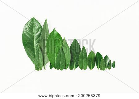 Forest treeline of green leaves on white background. Flat lay. Top view. Minimal nature concept.