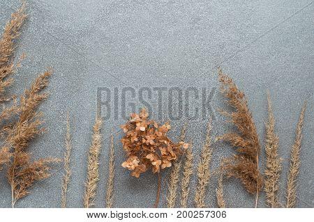 Autumn grass against the gray concrete. Autumn arrangement of dried herbs
