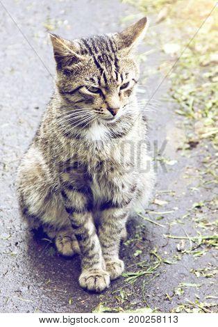 Graceful cat sitting on the asphalt in the sun