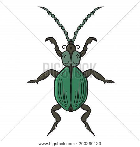 Green beetle. vector illustration. Drawing by hand