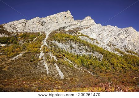 Shangri La, View Of Mountain Wall With Yellow Green Autumn Trees In Valley In Yading National Level