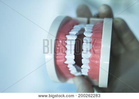 Dental Teeth Mouth Model