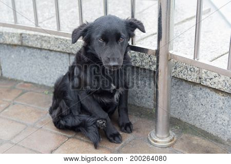 Homeless dog sits on the pavement. Pets