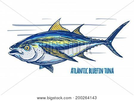 Atlantic bluefin tuna.Hand drawn sketch colored vector. Endangered species of marine fish.