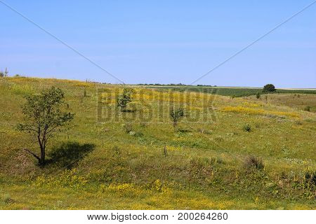 View of meadows and fields in the summer