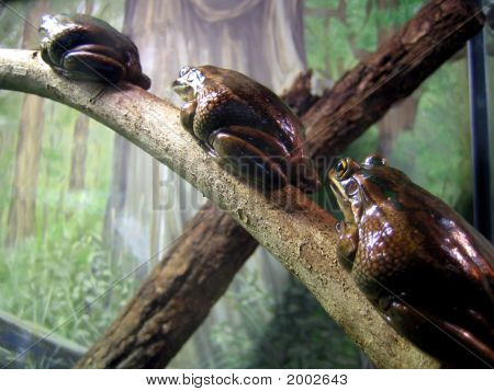 Cute Frogs 2