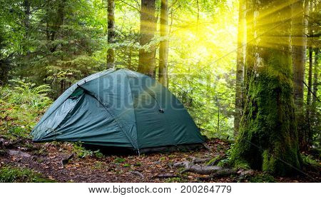 Morning landscape with tourist tent in forest