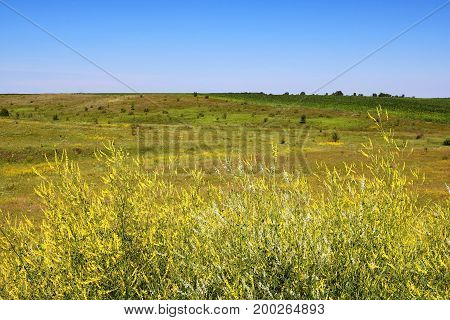 Meadows fields and yellow flowers in the summer