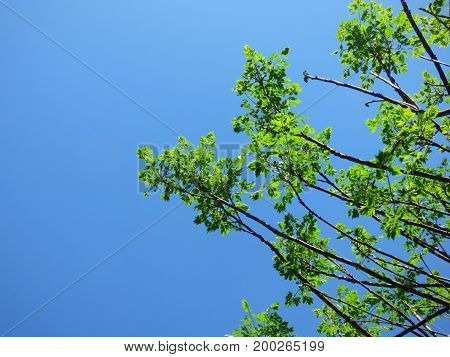 Nature. Leaves and branches. Cloudless sky at the background