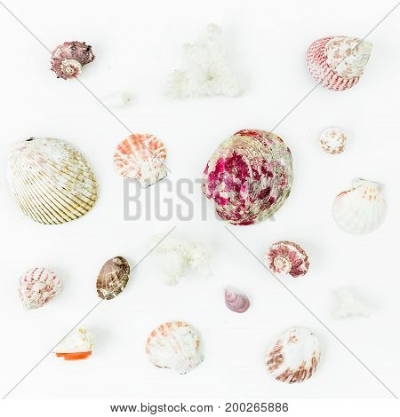 Pattern of tropical sea shells on white background. Flat lay. Top view. Ocean background