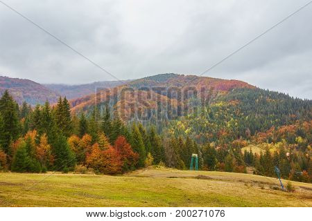 Autumn Landscape In Foggy Wood
