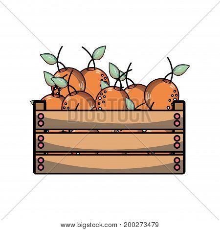 delicious oranges fruits inside basket vector illustration