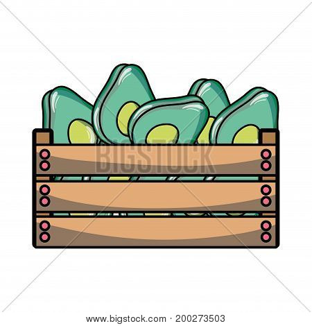 delicious avocados fruits inside basket vector illustration