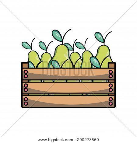 delicious pear fruits inside basket vector illustration