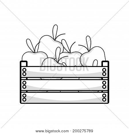 line delicious apples fruits inside basket vector illustration