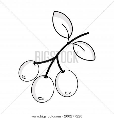 line coffee plant with leaves and grains vector illustration
