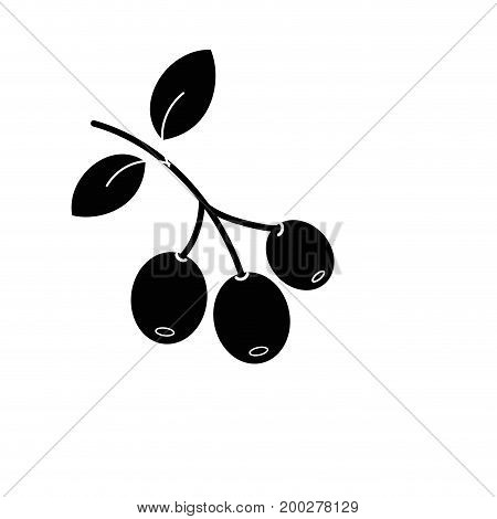 contour coffee plant with leaves and grains vector illustration