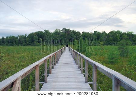 nature path wood bridge boardwalk green landscape swamp pathway