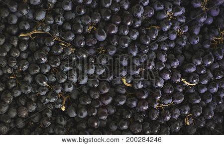 The Black Sultana grapes background. Fresh organic fruits