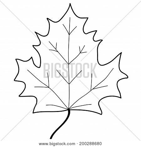 Maple leaf sign. Monochrome plane icon isolated on white background. Mono nature logo. Botany wood or garden symbol. Ecology flat silhouette. Foliage mark. Stock vector illustration