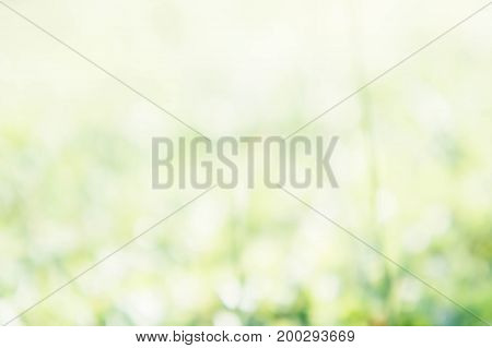 abstract blur nature green and white color background