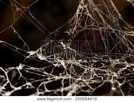 Spider web on the ceiling as a background .