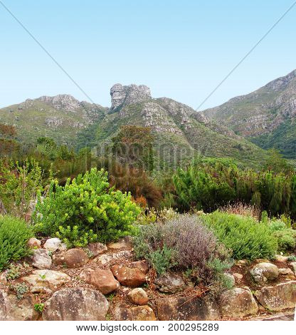 FROM CAPE TOWN, SOUTH AFRICA, THE KIRSTENBOSCH NATIONAL BOTANICAL GARDEN, NESTLED AT THE FOOT OF TABLE MOUNTAIN