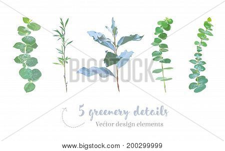 Mix of herbs and plants vector big collection. Cute rustic wedding greenery. Eucalyptus, mint wolf willow, silverberry foliage with leaves and stems. Watercolor style set. All elements are isolated