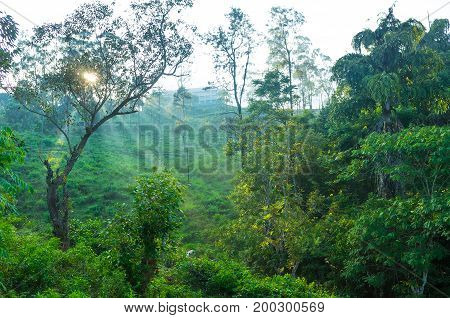 The Morning Over Tea Plantation In Ella