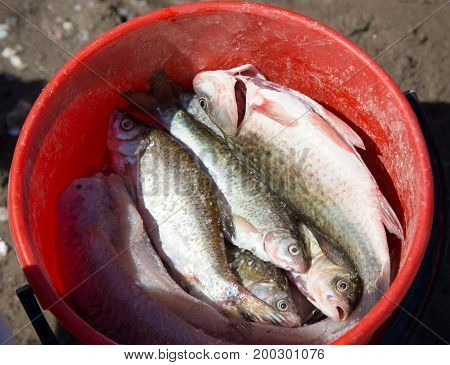 Fish in a bucket on a fishing trip .