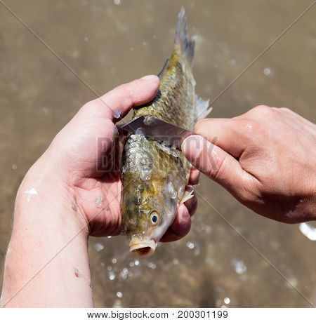 Fisherman to clean a fish with a knife on the river .