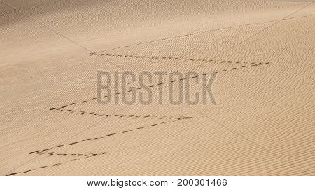 zig zag shape footprints in a desert of Rub al khali