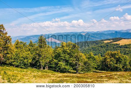 Beech Forest Down The Hillside Of Mountain Ridge