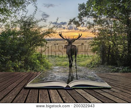Powerful Red Deer Stag In Countryside Landscape Scene Looking Out Into Distance Contemplation Concep