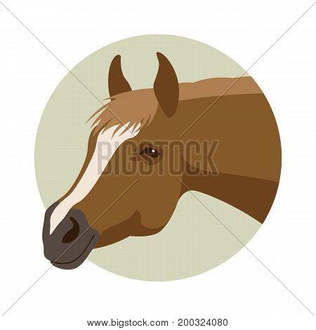 horse head vector illustration style flat profile side
