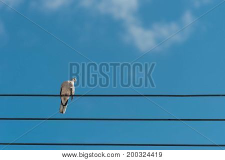 bird resting on the cable wire in clear blue sky background.copy space