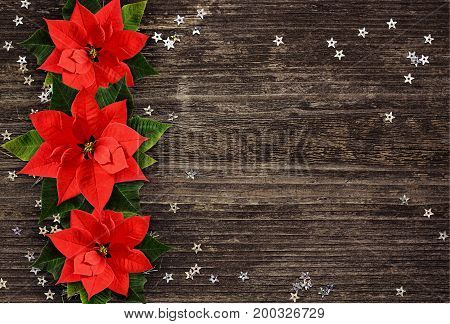 Christmas poinsettia flowers line on old wooden background. Flat lay. Top view.