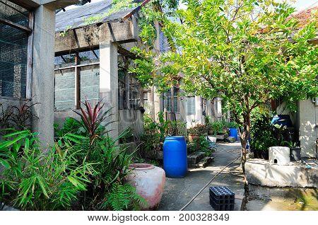 Garden greenhouse. Greenhouse in Bangkok Thailand .