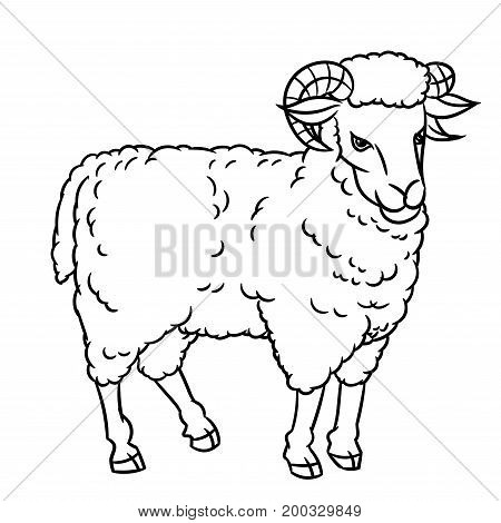 Hand drawing Sheep. farm animals set. Sketch graphic style. Design for education text book coloring book.