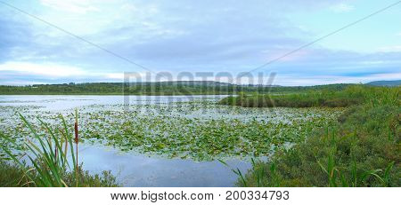 marsh swamp nature ecology waterlilies and sky wildlife environment