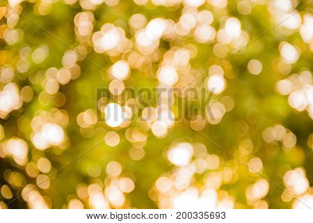 bokeh gold light and abstract blur background
